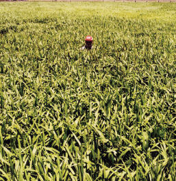 Organic-Crop-11b