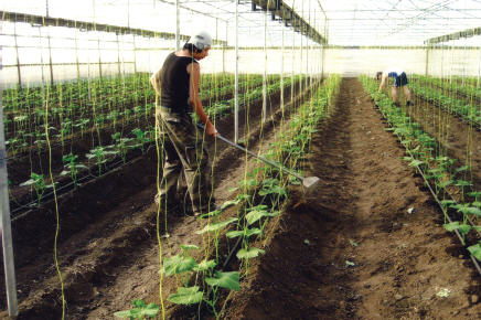 Organic-Crop-20a